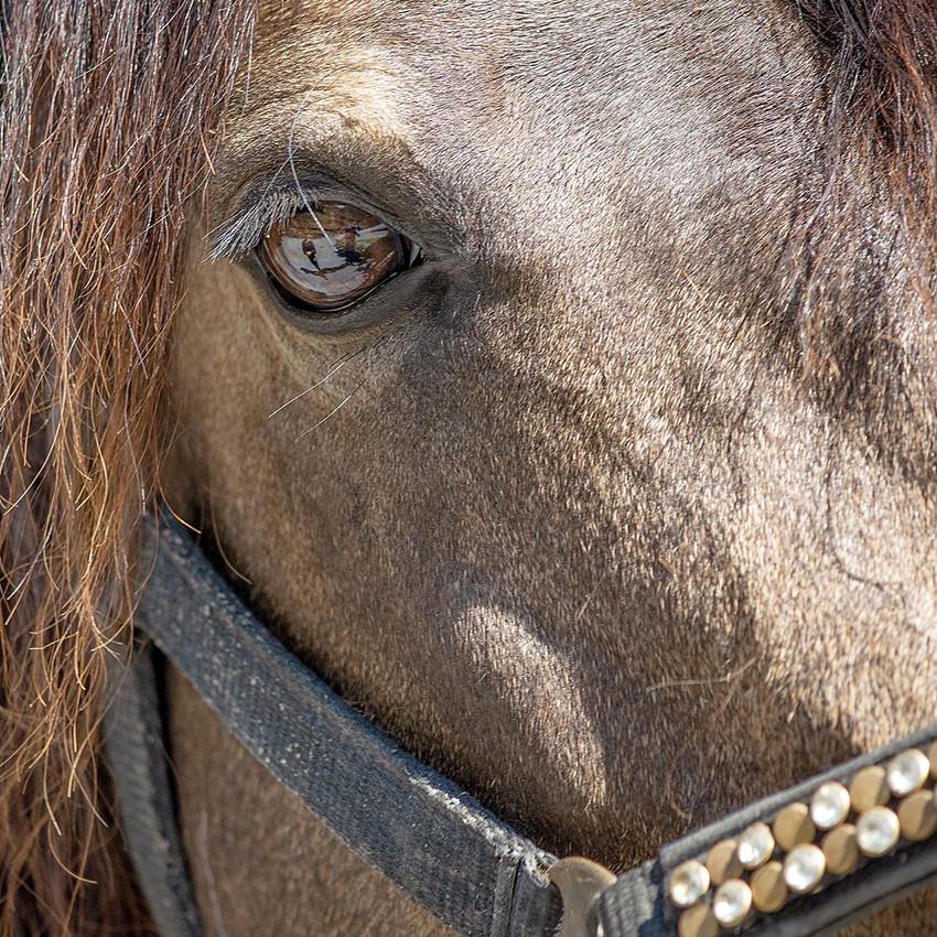 Uvéite du cheval : Causes et traitements