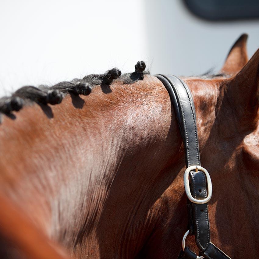 Tuto Vidéo : Soigner son cheval après un concours
