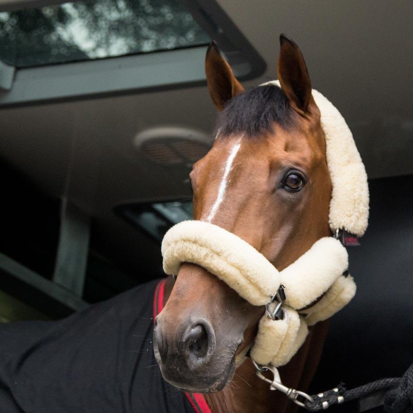 Nouveaux traitements pour le cheval : Cellules souches, ondes de choc, IRAP, PRP