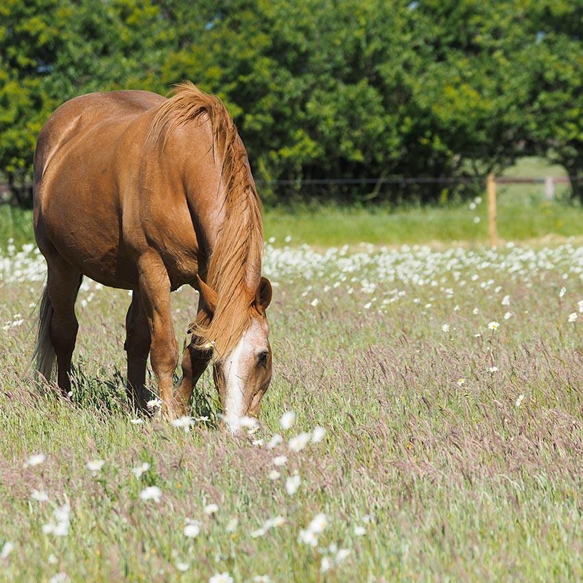 Oud paard: Hoe kan ik er goed voor zorgen?