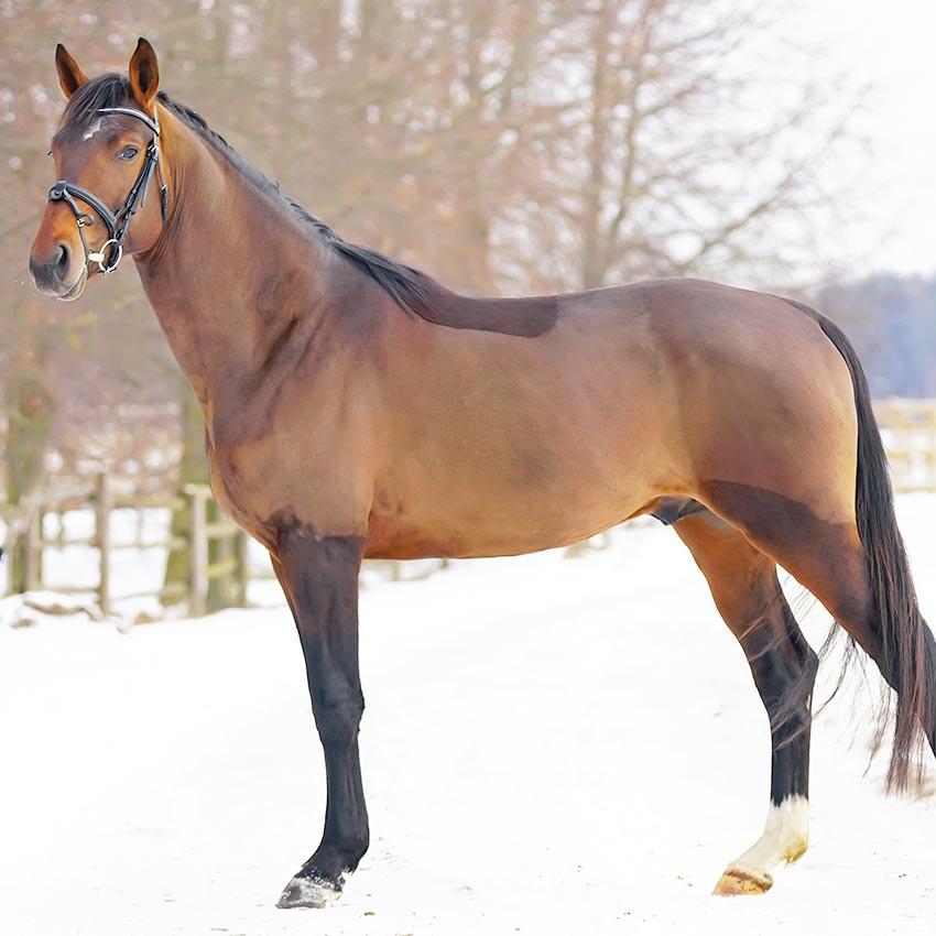Tondre son cheval : Tout ce qu'il faut savoir