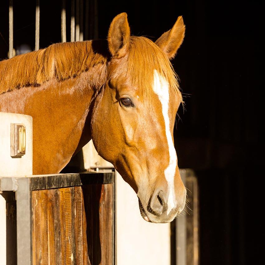 Argile chevaux : Quand et comment l'utiliser