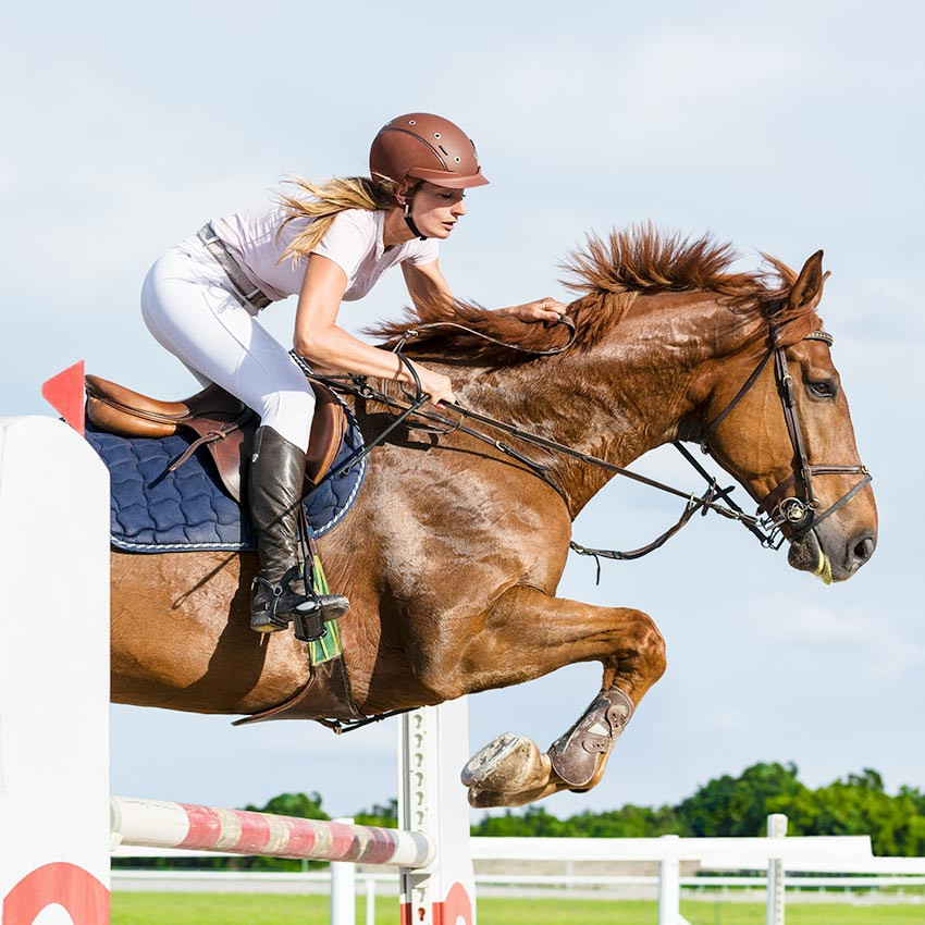 Coup de sang du cheval ou myosite : Comment réagir