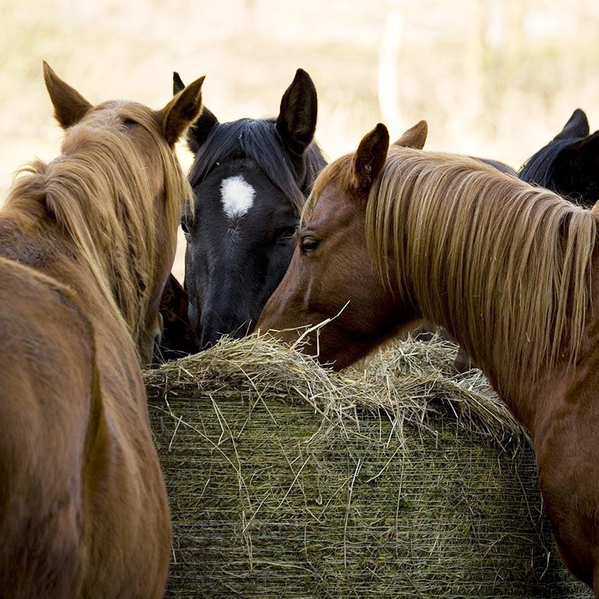 Composez votre palette sur mesure d'aliments pour vos chevaux