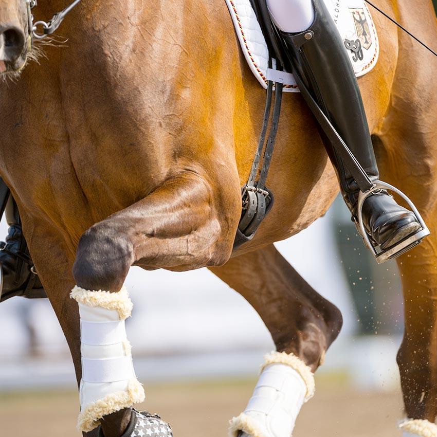 Muscles du cheval : Comment les soutenir et les stimuler