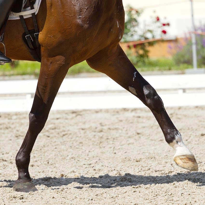 Suros chez le cheval : Comment prévenir et soigner
